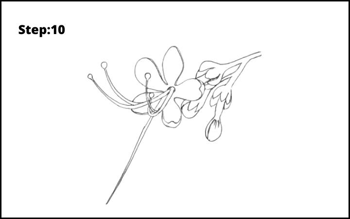 How to draw a pagoda flower  step 10