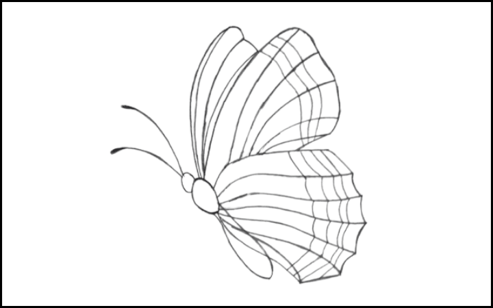 draw of butterfly step 10