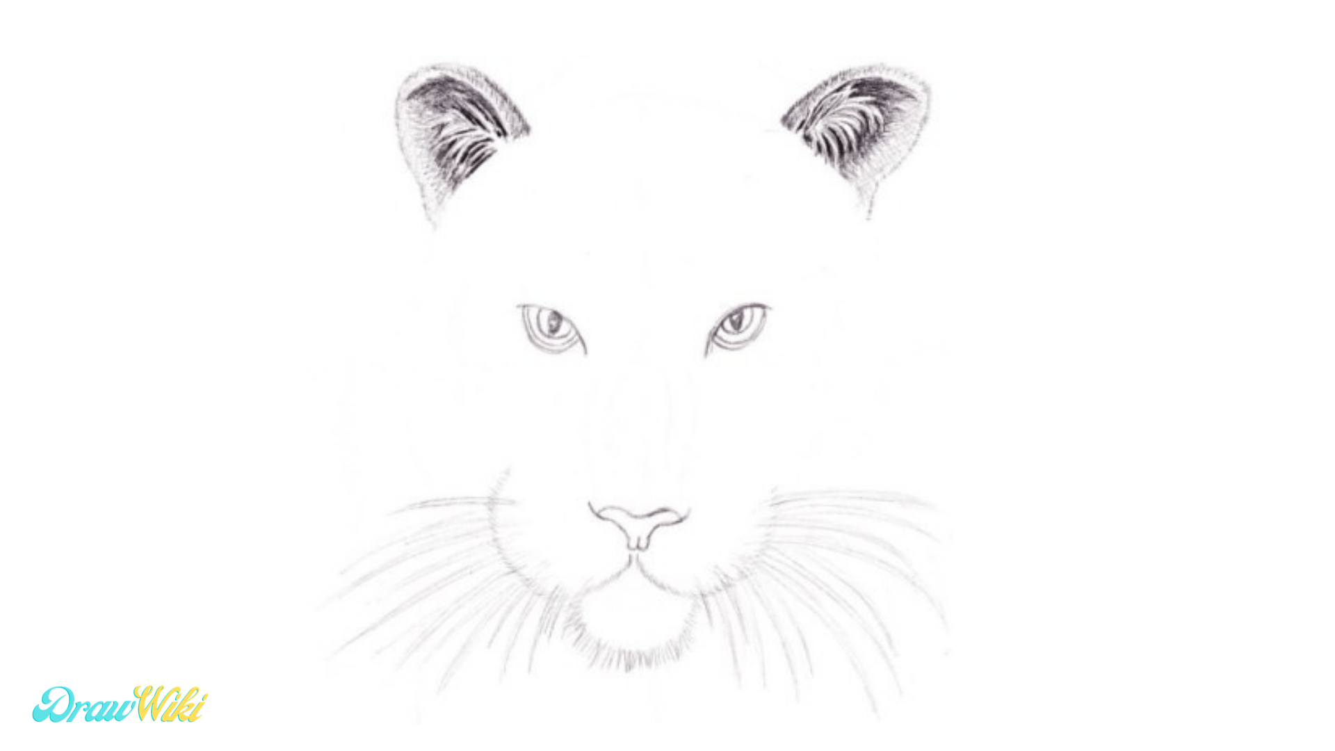 Step 10: Tiger Detailed Snout   Drawing