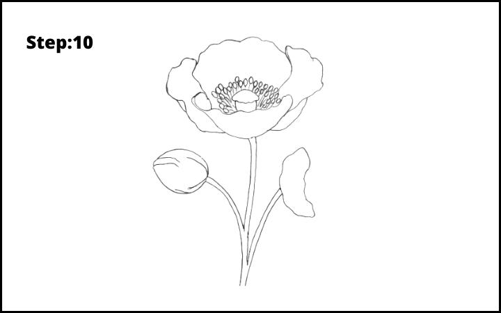 how to draw a realistic poppy  flower step 10