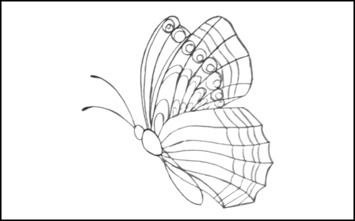 draw of butterfly step 11