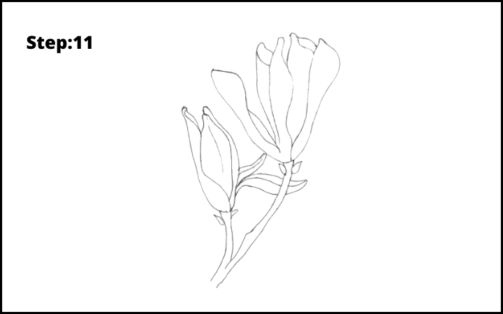 how to draw a magnolia flower step 11
