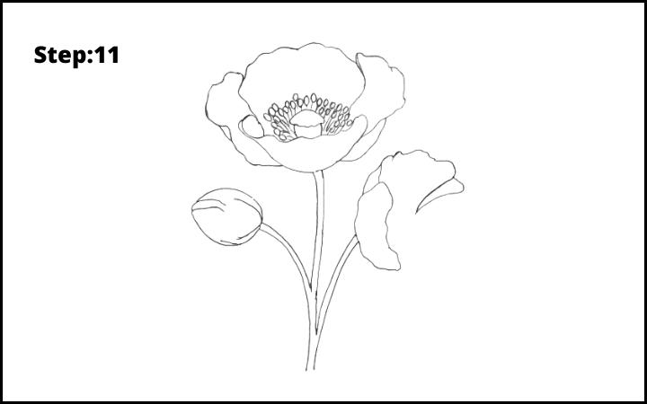 how to draw a realistic poppy  flower step 11