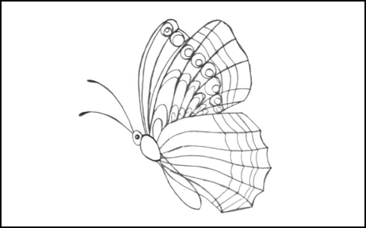 draw of butterfly step 12