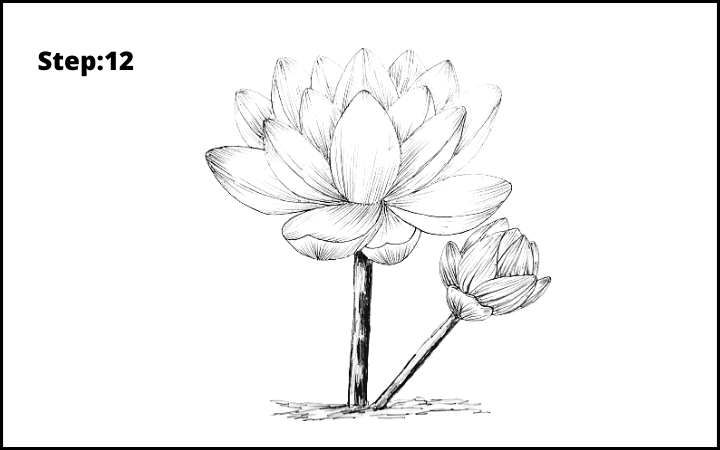 how to draw lotus flower step 12