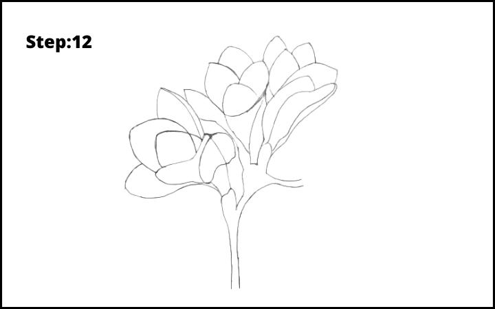 How to Draw Freesia Flower step 12