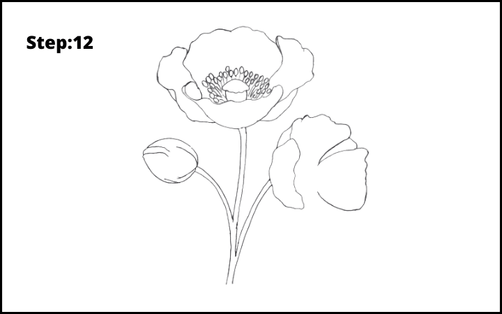 how to draw a realistic poppy  flower step 12