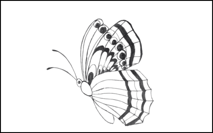draw of butterfly step 13
