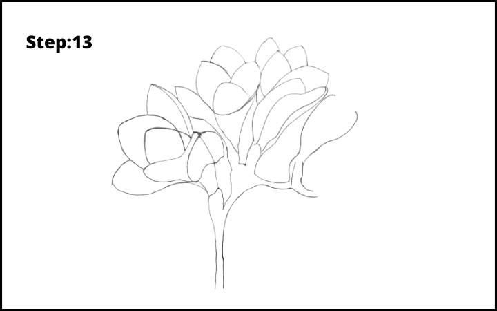 How to Draw Freesia Flower step 13