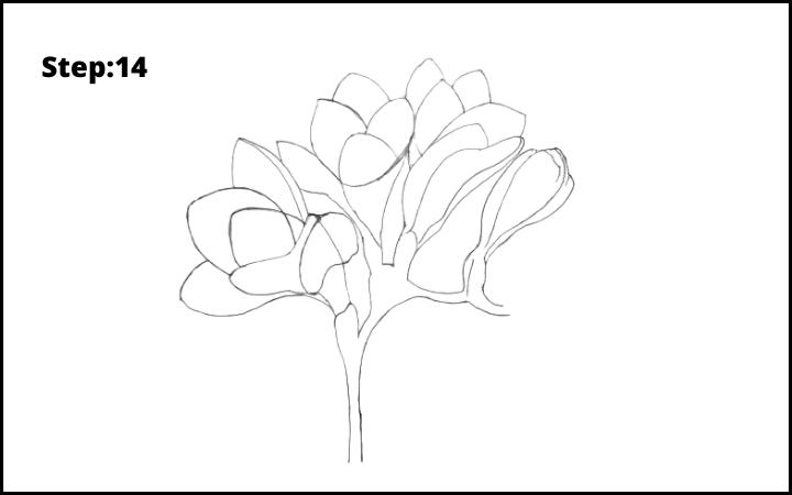 How to Draw Freesia Flower step 14