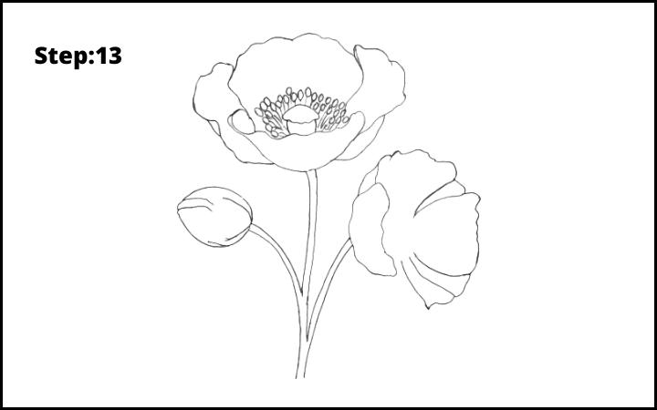 how to draw a realistic poppy  flower step 13