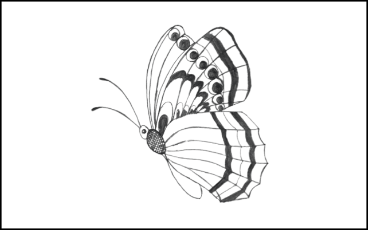 draw of butterfly step 14