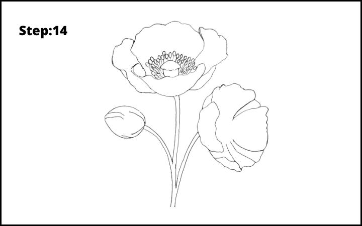 how to draw a realistic poppy  flower step 14