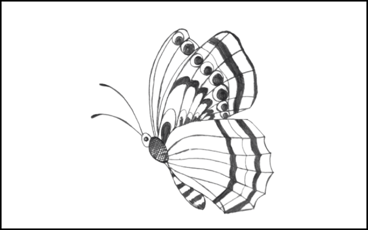 draw of butterfly step 15