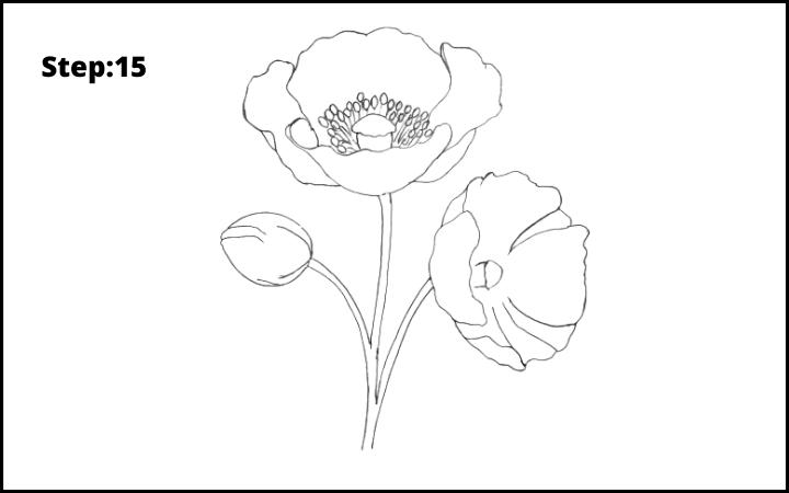 how to draw a realistic poppy  flower step 15