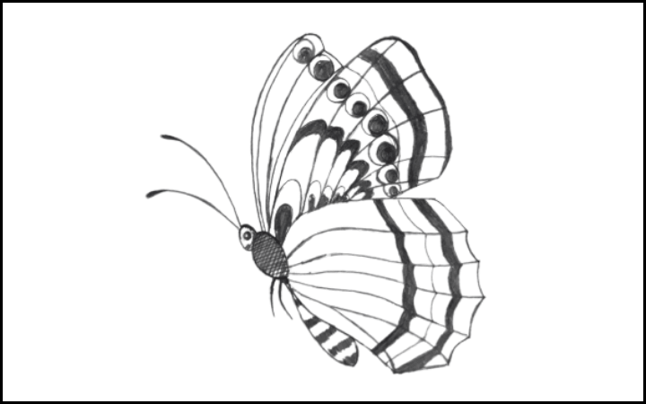 How to draw a butterfly step 16