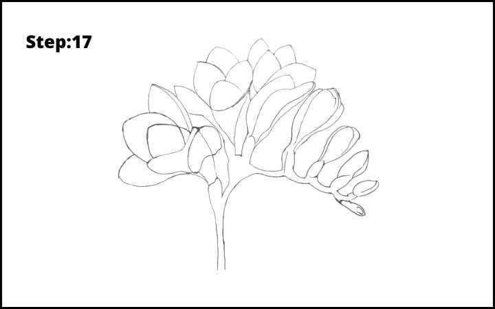 How to Draw Freesia Flower step 17