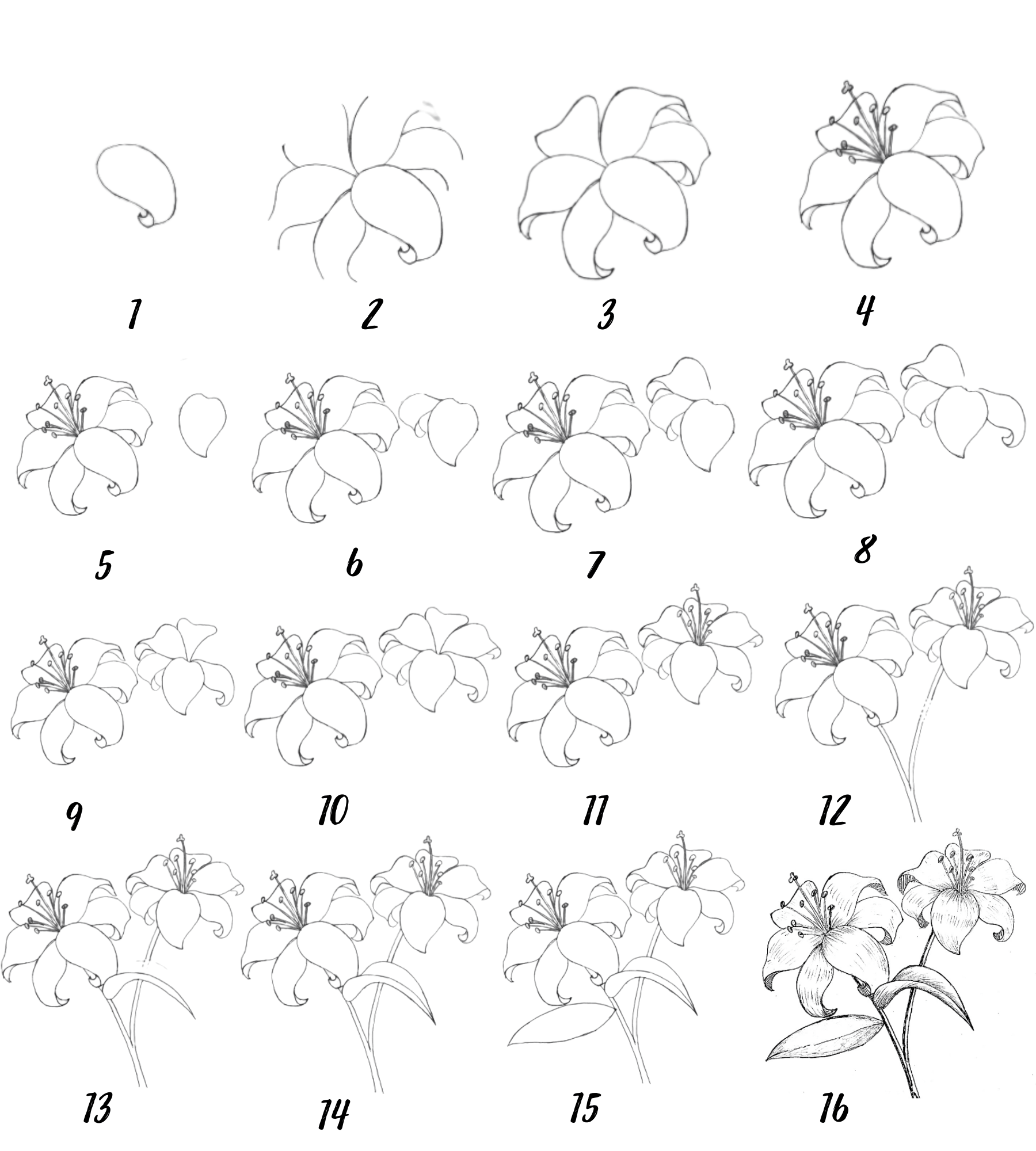 How to draw a lily flower