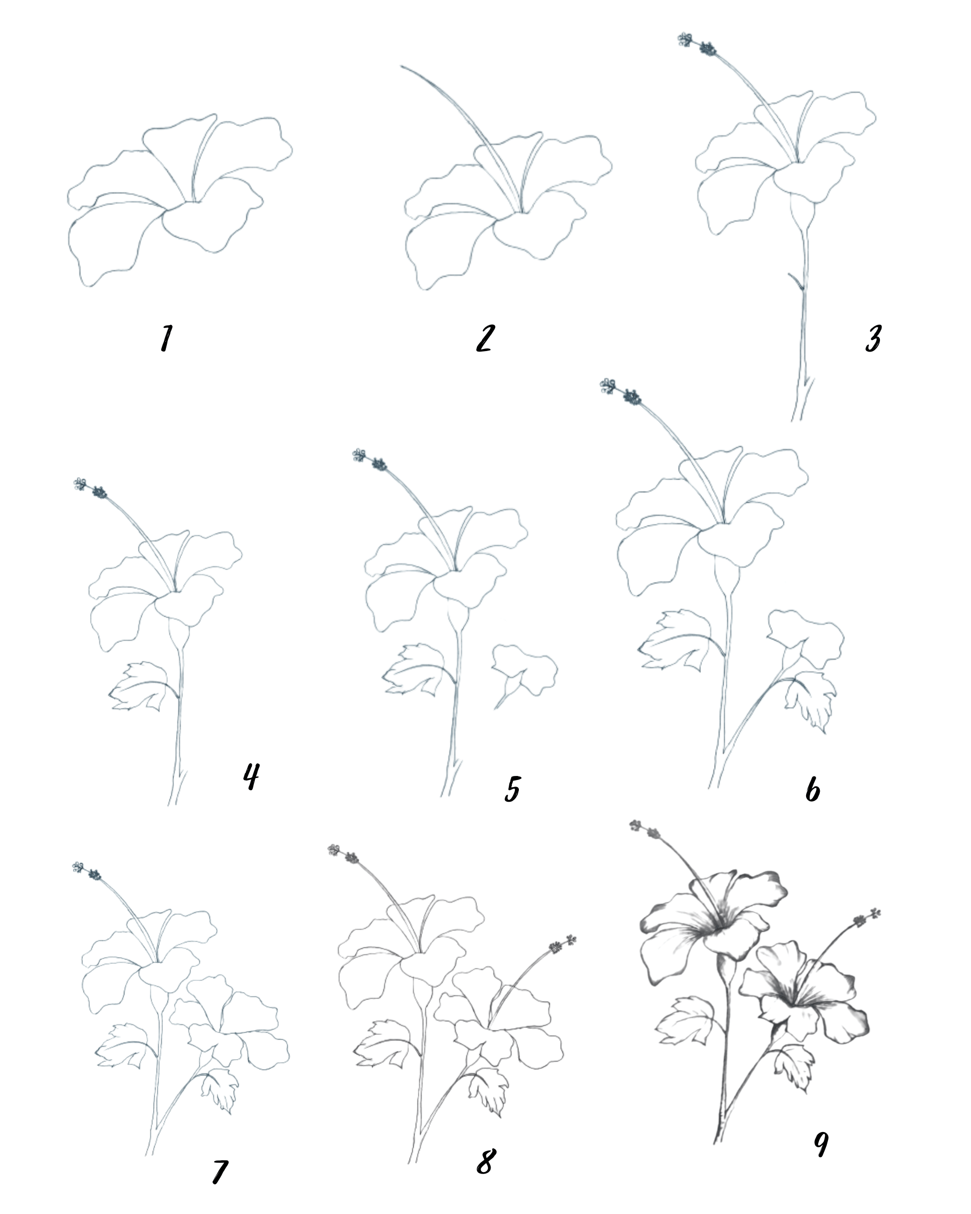 hibiscus rose drawing, how to draw a hibiscus flower step by step  guides