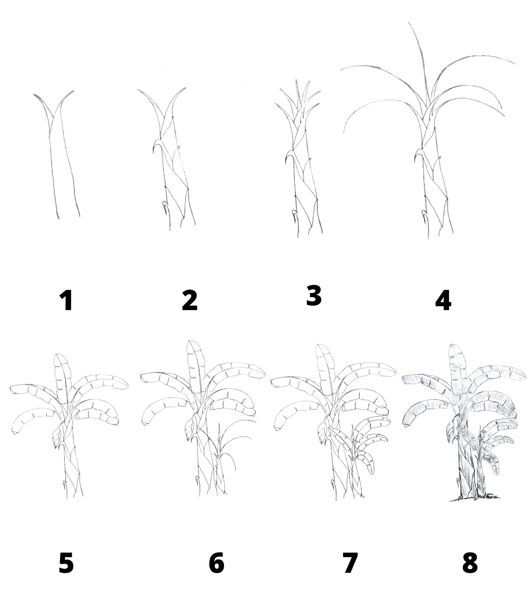 How to Draw Banana Tree Step by Step
