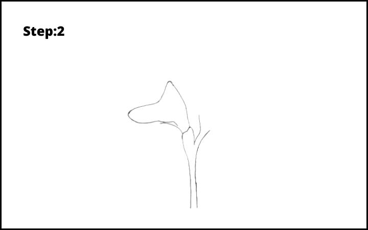 How to Draw Freesia Flower step 2