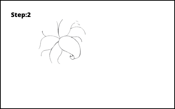 lily flower drawing step 2