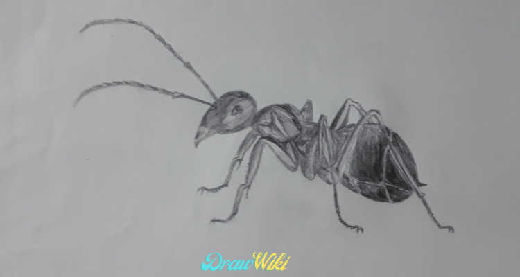Step 10: Ant Detailing