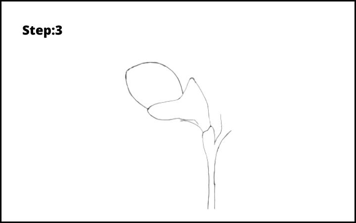 How to Draw Freesia Flower step 3