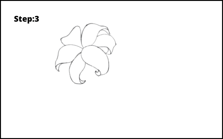 lily flower drawing step 3