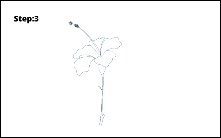 how to draw hibiscus flower step 3