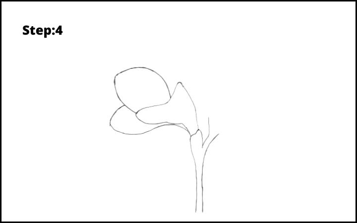 How to Draw Freesia Flower step 4