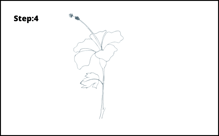 how to draw hibiscus flower step 4