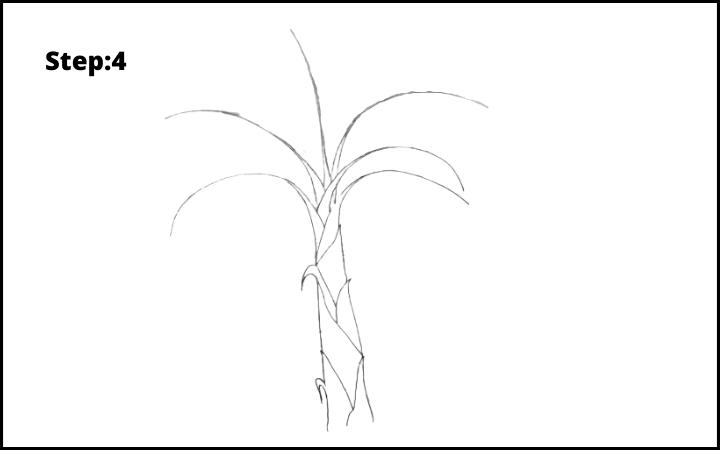 How to Draw Banana Tree Step 4