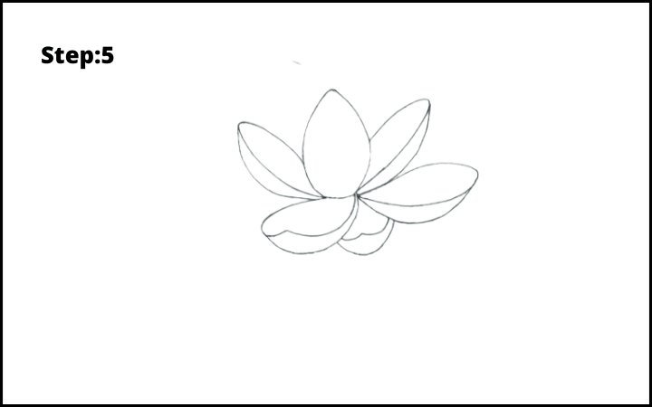 how to draw lotus flower step 5