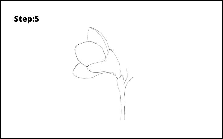 How to Draw Freesia Flower step 5