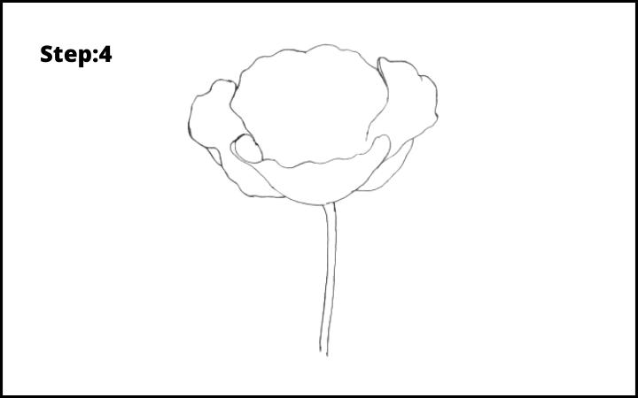 how to draw a realistic poppy step 4