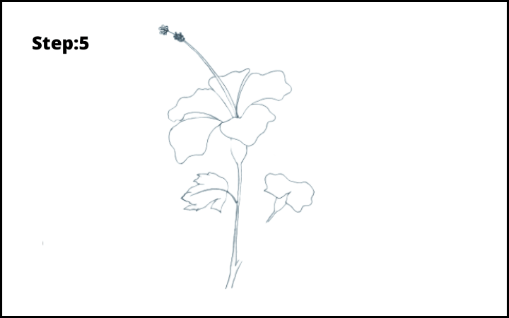 how to draw a hibiscus flower step 5