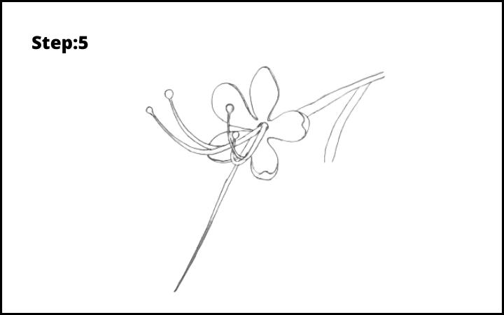 How to draw a pagoda flower  step 5