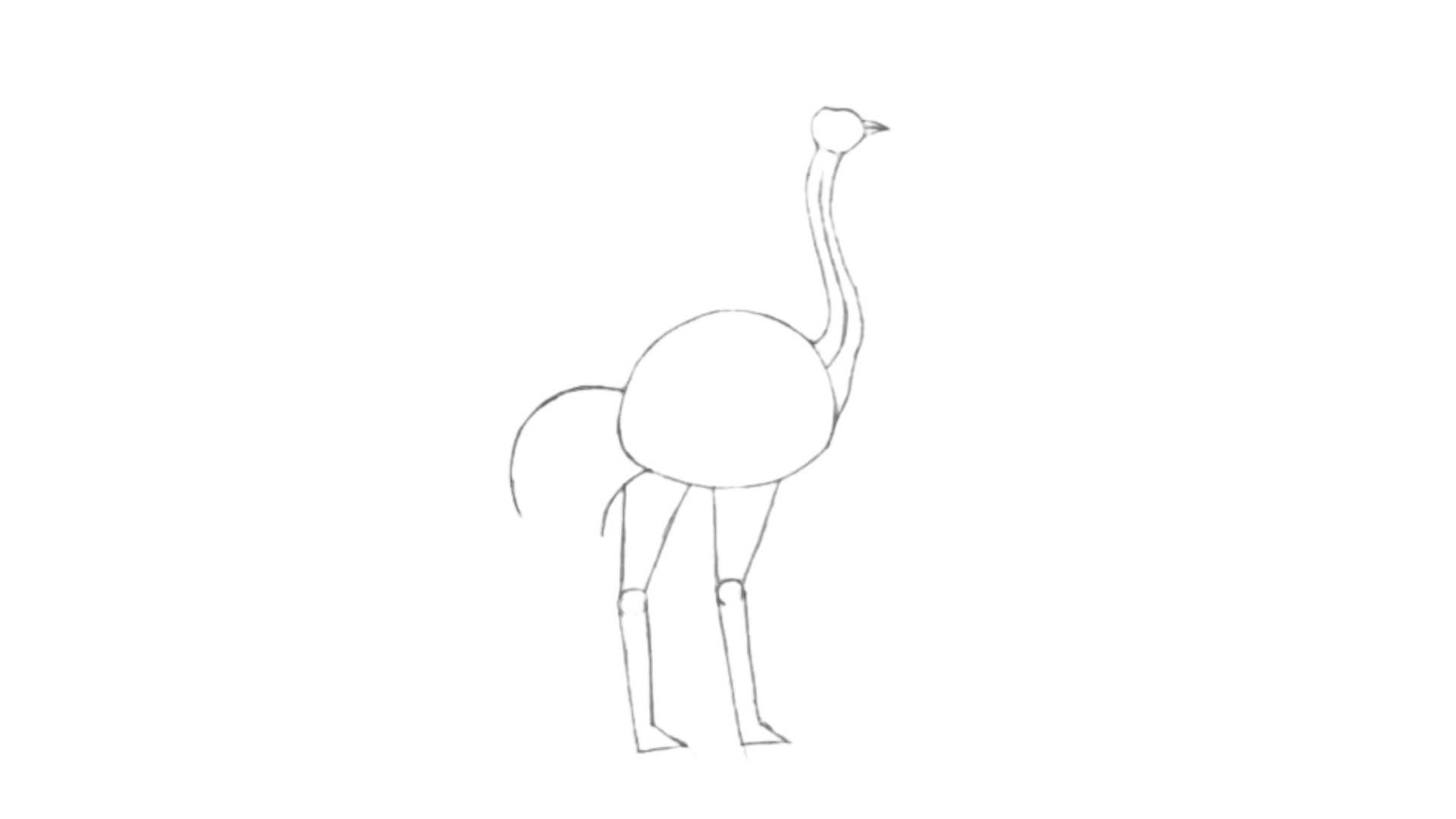 step Ostrich draw 5
