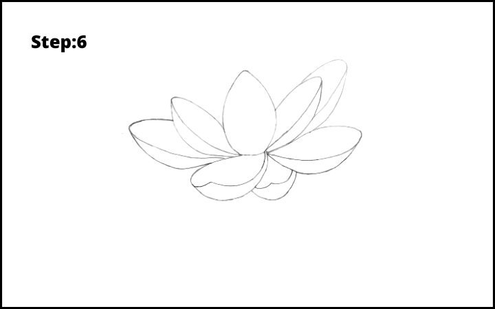 how to draw lotus flower step 6