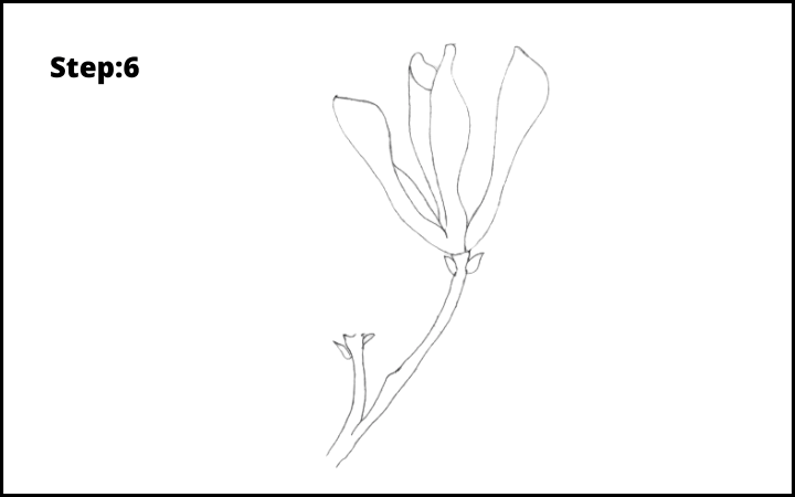 how to draw a magnolia flower step 6