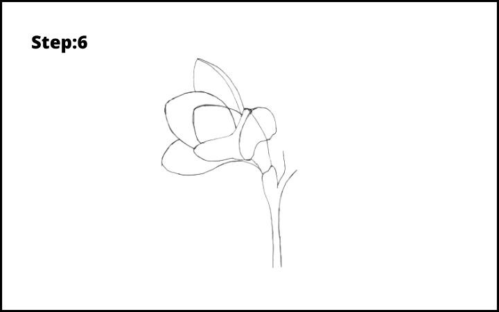 How to Draw Freesia Flower step 6