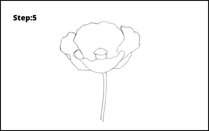 how to draw a realistic poppy step 5