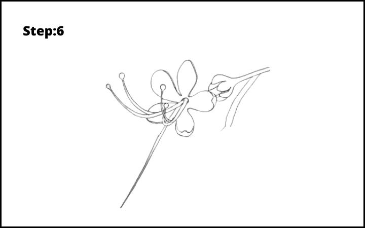 How to draw a pagoda flower  step 6