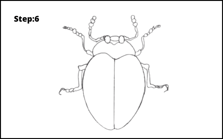 How to draw a bug  step 6