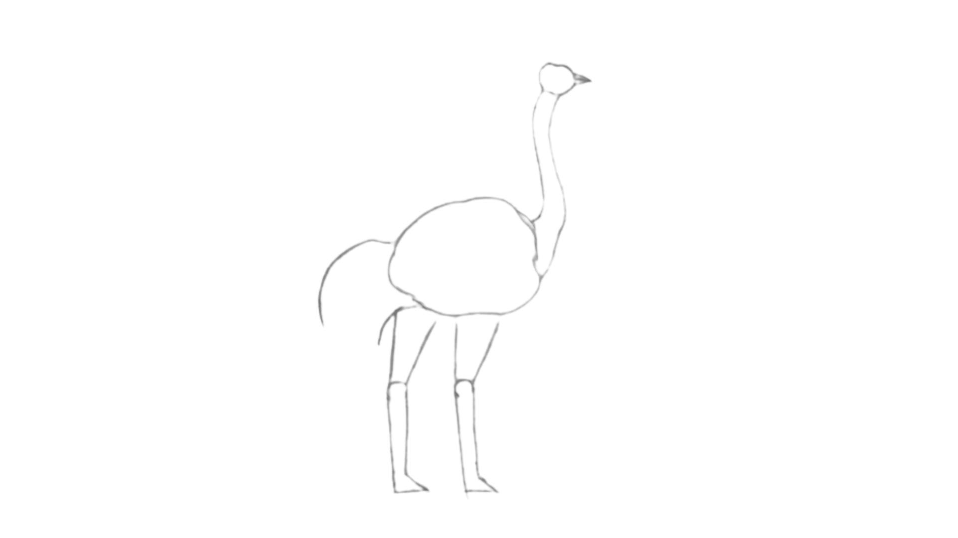 step Ostrich draw 6