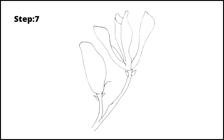 how to draw a magnolia flower step 7