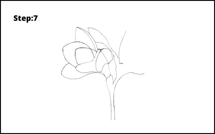 How to Draw Freesia Flower step 7