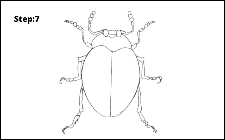 How to draw a bug  step 7
