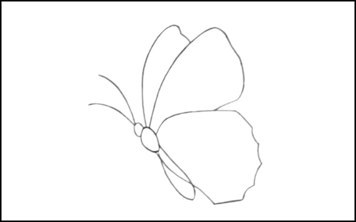butterfly drawing step 7